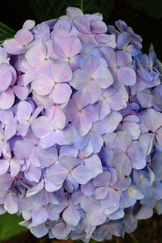 Fantasy Wedding, Gothic Wedding, Amazing Flowers, Beautiful Roses, Hydrangeas, Flower Prints, Flower Power, Tulips, Florals
