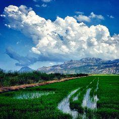 ¡Media semana #Alifornia! Hoy con esta imagen verde de los campos de arroz en el Parque La Marjal de #Pego. :)) ⛅️ #Alicante #CostaBlanca #CaliforniaEuropea www.alifornia.es Bonita foto de @rafelse51