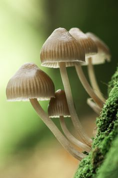 Autumn Sussex Fungi by Joanne Hedger on 500px