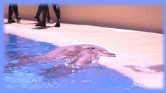 Quick links to share the petition: Mirage Hotel, Las Vegas: Empty the tanks and release the dolphins!   Yousign.org