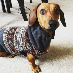 www.dogs-likes.com  //   WoOOF!!  #funnydogpictures, #perros, #typeso dogs, #catsanddogs, #dogtype,#dogbreeds, #kindsofdogs, #funnydogvideos, #mediumsizeddogs, #bestdogbreeds, #dangerousdogs, #whattypeofdogshouldiget, #dog, #dogs, #perros, #mascotas, #pets, #puppy, #puppies, #razasdeperrospequeños #chiens #hunde #犬 #собаки