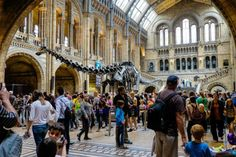 A handy guide for families visiting the fabulous Natural History Museum London...