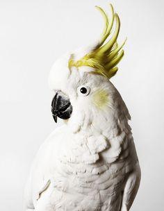 Leila Jeffreys Bird Photography