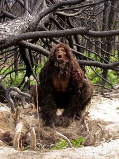 Bigfoot are not just friendly forest giants. Some encounters are just too bizarre and terrifying to ignore. Bigfoot Movies, Real Bigfoot, Bigfoot Sasquatch, Bigfoot Pictures, Bigfoot Pics, Bigfoot Sightings, Mothman, Cryptozoology, Ancient Aliens