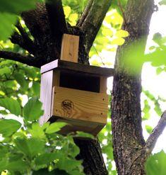 Unterstütze die Wildvögel in deinem Garten! Immer weniger Totholz, kurzgeschnittene Hecken und aufgeräumte Gärten bieten unseren heimischen Wildvögeln wenig Plätze zum Nisten. Durch das Aufhängen von Nistkästen mit unterschiedlich großen Einfluglöchern, bietest du verschiedenen Vogelarten Nisthilfen.  #vogelnistkasten #nistkasten #naturgarten #sprossundleiter #natur #vögel #gartenliebe #landleben #nisthilfe #meisenkasten #vogelhaus #vogelhäuser #wildvögel #naturschutz #nistkästen Bird, Outdoor Decor, Home Decor, Kinds Of Birds, Natural Garden, Country Living, Random Stuff, First Aid, Decoration Home