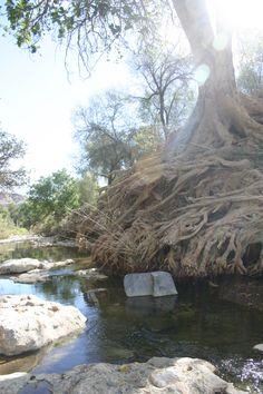 "The Tsauchab River, Namibia.  In ""Early light"" by Elizabeth Viljoen.  http://luhambo.wordpress.com/2013/08/02/early-light/"