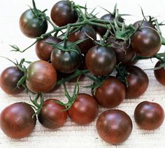 Just ordered a Black Cherry Tomato plant from PottersPlants yesterday.  Can't wait to see what they taste like when they grow to full size later this summer.  Apparently they are exceptionally sweet and easy to grow outdoors.