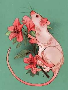 """""""pink rat and azalea commission for Paula"""" Cute Animal Drawings, Animal Sketches, Cute Drawings, Cute Rats, Wow Art, Pretty Art, Art Inspo, Art Reference, Character Art"""