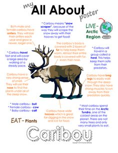 """My All About Caribou Book - (Arctic/Polar Animals) from Courtney McKerley on TeachersNotebook.com (9 pages)  - This """"All About"""" book will be a fun addition to your classroom and lessons on caribou. Also available in a polar animal bundle pack which includes walrus, Arctic wolf, Emperor Penguin and polar bears."""