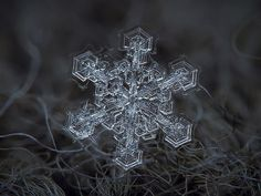 Amazing macro-photography of individual snowflakes [10 Pictures]. I want to figure out how to do this!