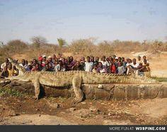 A 7 Meter Long, 1200 Kg Crocodile In Africa