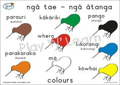 Te Ao Maori : Firth School: Teacher Resources Color Activities, Activities For Kids, Maori Words, Family Day Care, Poster Colour, Learning Spaces, Teacher Resources, School Teacher, Language