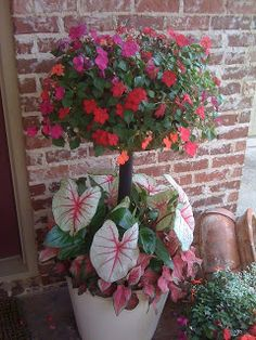Impatiens, Caladiums, Begonias...pretty idea for deck or porch...just one big pot like this