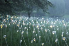 Amazing outdoor exhibition by British artist and lighting designer Bruce Munro - from @design milk