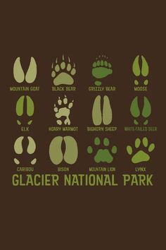 Camping Jokes For Kids Glacier National Park Montana, Glacier Park, Best Places To Camp, Camping Places, Camping Jokes, Camping Trailers, Camping Cabins, Rv Camping, Backpacking