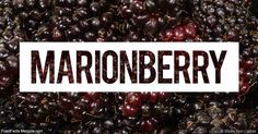 Learn more about marrionberry nutrition facts, health benefits, uses and other fun facts to enrich your diet. http://foodfacts.mercola.com/marionberry.html?utm_source=dnl&utm_medium=email&utm_content=secon&utm_campaign=20170815Z2&et_cid=DM154646&et_rid=15822748