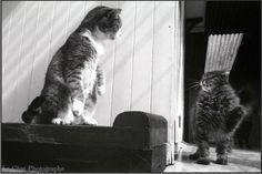 bagarre entre deux chats duo de chats dans la chatterie du Refuge