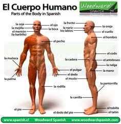 Partes del Cuerpo Humano en Español - Parts of the Body in Spanish #spanish