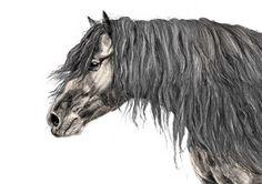 Illustratrice naturaliste & dessin animalier: Merens #2