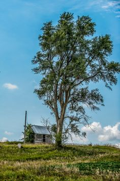 Up on an Iowa Country Hillside stands an abandoned shed shared by a giant tree