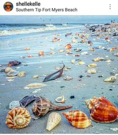 Travel Discover Seashells on Fort Myers BeachI would like to be there collection those shells that would be a field day for me Beach Art Ocean Beach Fort Myers Beach Shell Beach Am Meer Beach Crafts Shell Art Florida Beaches Ocean Life