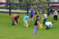 Dandelion picking contest