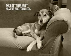 the best therapist has fur and four legs…yes…yes…yes!