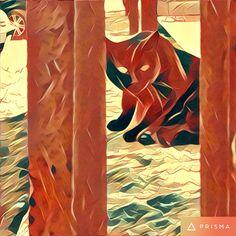 Prisma: gatto nero