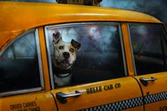 Niagara Falls by Mike Heiney on - Rocco, Ghost of Xmas Puppies Past, adoptable pooch from Las Vegas Animal Network Rescue. Pet Taxi, Dog Wallpaper, Lady And The Tramp, Dogs Of The World, All Dogs, Mans Best Friend, Belle Photo, Dog Life, Animal Photography