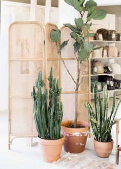 urbanoutfitters: UO Happenings: New in the Space 15 Twenty Home Showroom (via thouswell)