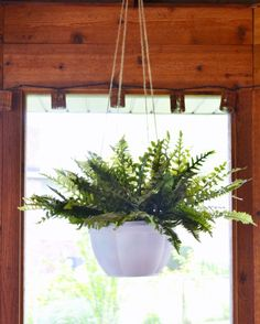 How to Make Your Cheap Plastic Planters Look High-End ~~remove plastic hangers~spray paint with Rust-oleum Painter's Touch 2X Ultra Cover Paint + Primer~use twine for hanging~insert a faux fern~~