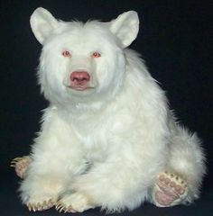 Wow A albino bear