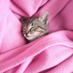 Kitty sleeping in a cozy pink blanket how cute Cute Kittens, Cats And Kittens, Pretty In Pink, Pink Love, Crazy Cat Lady, Crazy Cats, Pink Blanket, Sleepy Cat, Tier Fotos