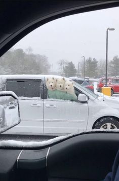 These Samoyed dogs looking out the car window on a snowy day warms our hearts! Such a funny and cute picture Animals And Pets, Funny Animals, Cute Animals, I Love Dogs, Cute Dogs, Funny Animal Photos, Animal Pics, Funny Photos, Samoyed Dogs