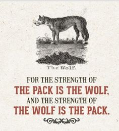 Wolf Wolf Pack Quotes, Lone Wolf Quotes, She Wolf, Wolf Girl, Wolf Warriors, Alpha Wolf, Lion Love, Wolf Painting, Wolf Spirit Animal