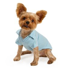 yorkie boys dressed up pictures | Yorkie Dressing Tips