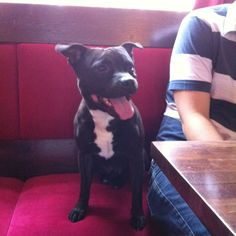 Smiley staffy :-) Staffordshire Terriers, Family Dogs, Smiley, Doggies, Pitbulls, Cats, Animals, Little Puppies, Gatos