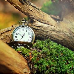 #pocket #watch #tree
