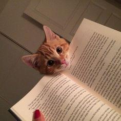 Co robisz? Czytasz? Ciekawe? Daj popatrzeć.