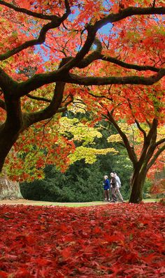 Westonbirt Arboretum in Gloucestershire, England - 16 Beautiful Photos of Incredible Fall
