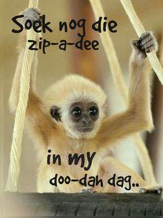 Soek nog die zip-a-dee. Afrikaans Quotes, Godly Man, Cute Pictures, Humor, Lekker Dag, Words, Funny, South Africa, Garden