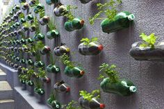 If you are thinking of a nice, sustainable way of recycling plastic bottles, you could get your inspiration from this big vertical garden made using recycled soda bottles. Created as… Reuse Plastic Bottles, Recycled Bottles, Plastic Containers, Plastic Planters, Water Bottle Recycling, Plastic Terrarium, Plastic Jugs, Spice Containers, Plastic Bottle Crafts
