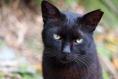 黑貓人像 - 侯硐貓村 - Black Cat Portrait - Houtong Cat Village Taipei Taiwan