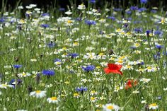 Fancy growing some wildflowers? #homesfornature