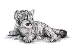 so cute mountain lion cub