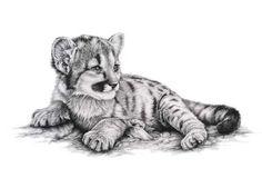 so cute mountain lion cub