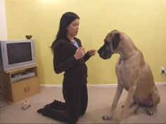 Hypoallergenic Dog Food For Allergy Relief – Today's Dog Trainer Dog Training Books, Dog Training Videos, Best Dog Training, Puppy Day, Great Dane Puppy, Hypoallergenic Dog Food, Dog Clicker Training, Dane Puppies