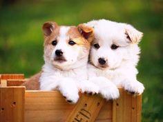 Puppy pals.