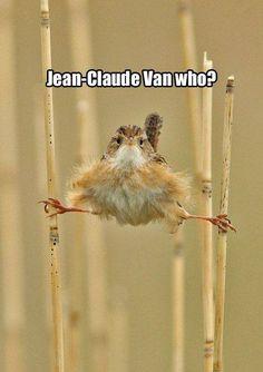 Jean-Claude Van who?