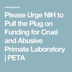 Please Urge NIH to Pull the Plug on Funding for Cruel and Abusive Primate Laboratory | PETA